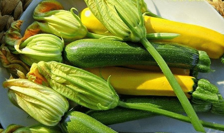 Bí ngòi - Thực phẩm không thể thiếu trong bữa cơm hè