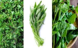 Bộ ba anh em nhà rau xanh siêu hợp với thời tiết Việt Nam nhé!